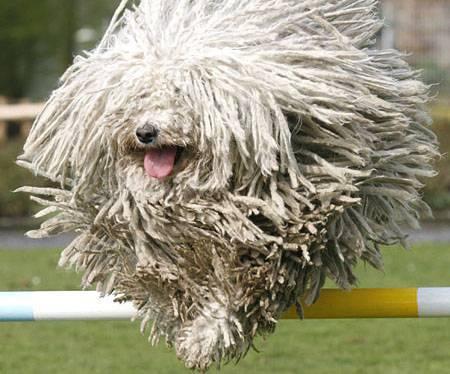 Razze Di Cani Che Non Perdono Il Pelo