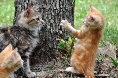 socializzazioen gatto