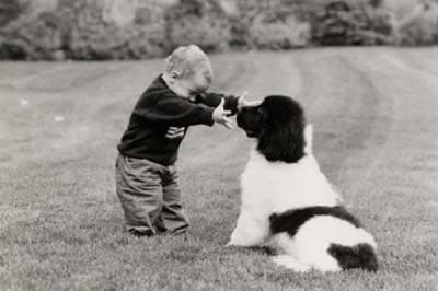 bambino cane