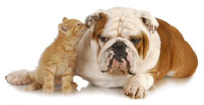 cane gatto1