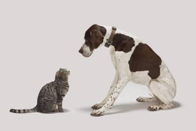 tips - cane gatto -