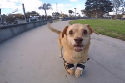 cane protesi