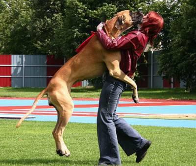 cane salta