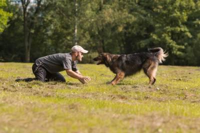 shaping addestramento cane