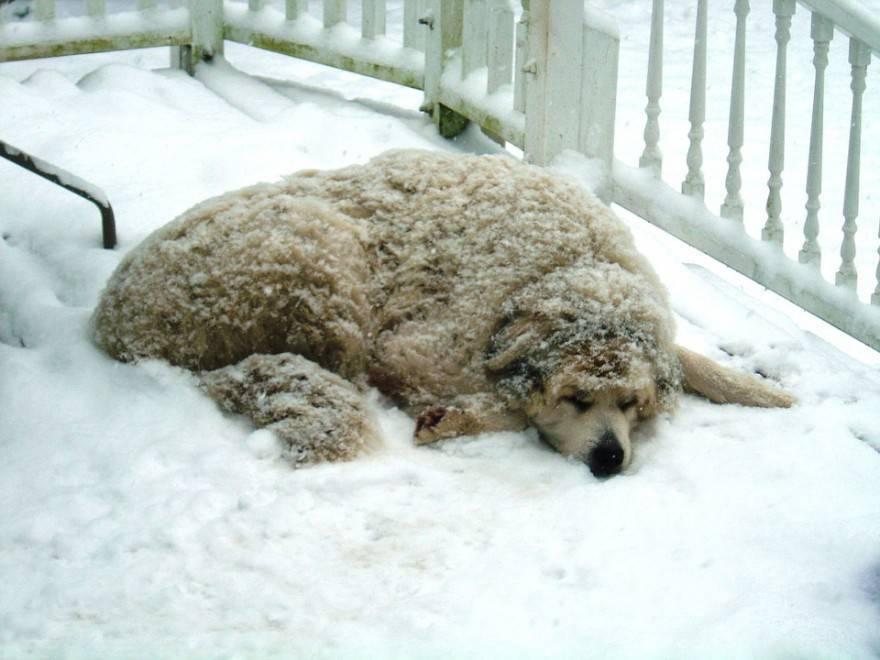 animali e neve
