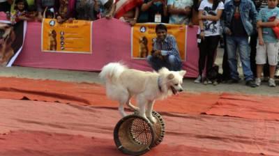 cani circo