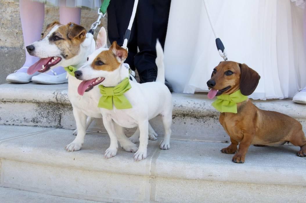 Vietato ospitare pi di tre cani in casa scatta la for Ospitare a casa