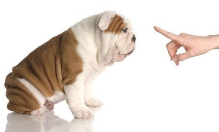 comando cane