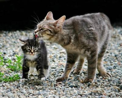 gatti cuccioli 9g