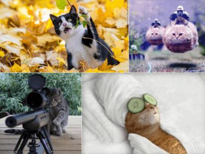 gattini  bruxelles