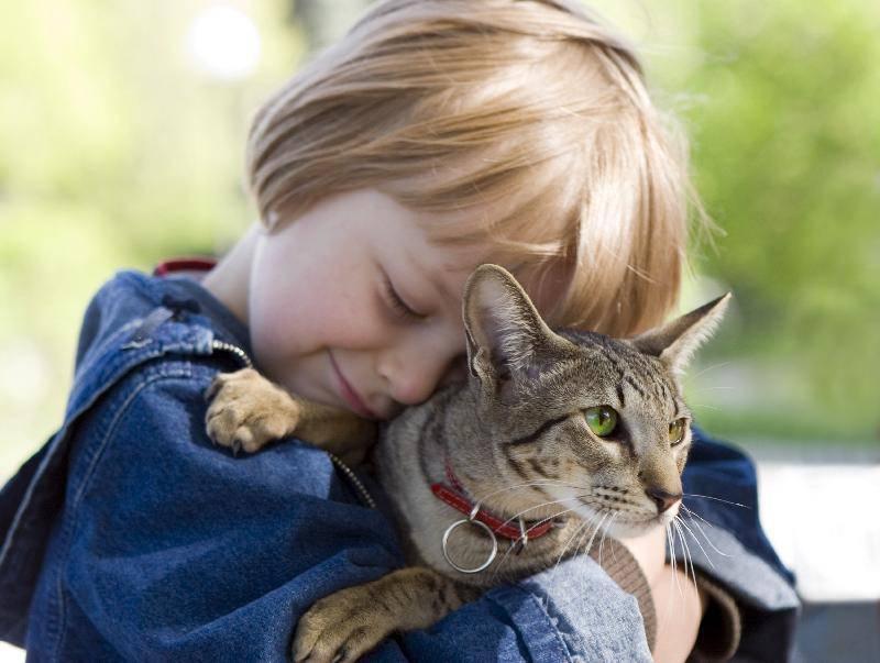 gatto bambino