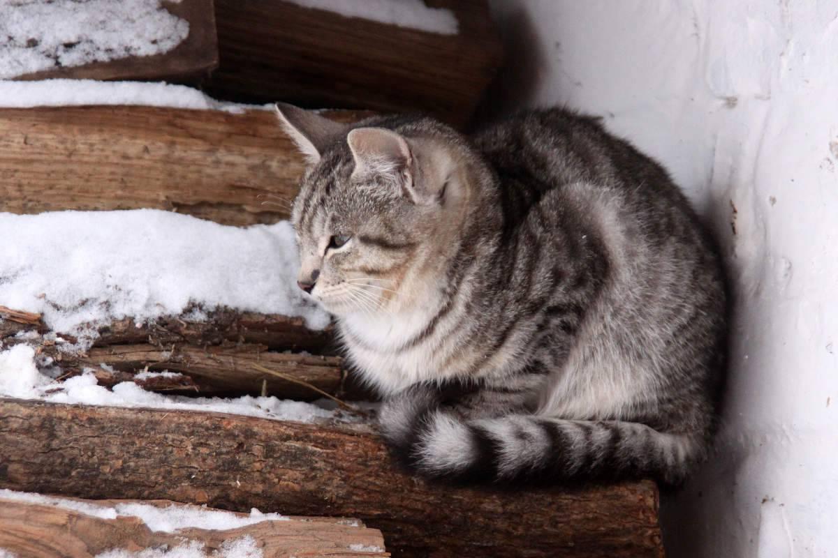 Un gatto infreddolito