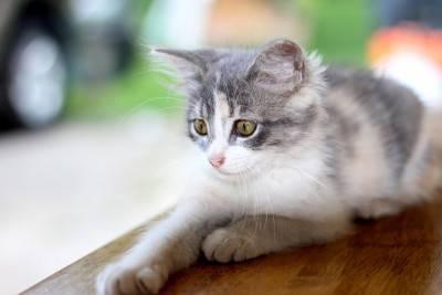 gatto free