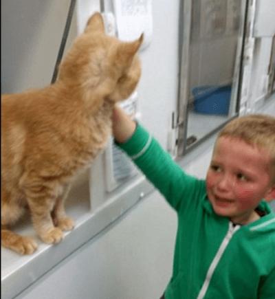 gatto ritrovato