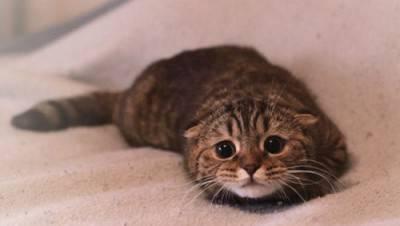 gatto terrorizzato