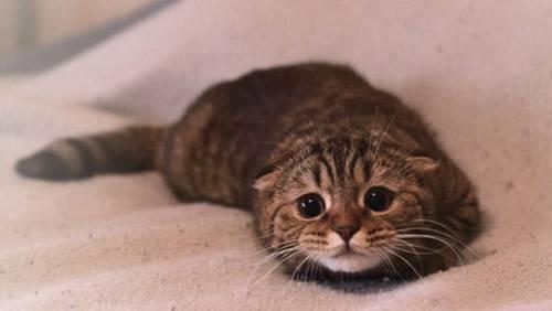 Gatti Terrorizzati Dai Cetrioli Ecco Perché Amoreaquattrozampeit