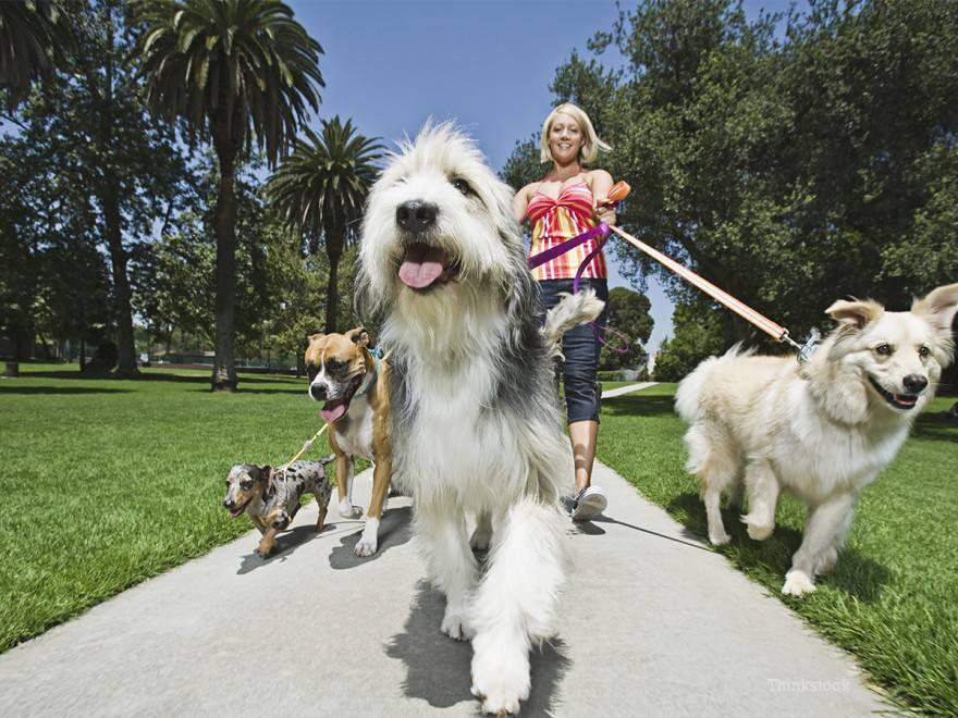 multa cane passeggio