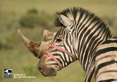 """""""Niente potrà riportarli. Salviamo i rinoceronti"""", Agenzia Stick, Sud Africa"""