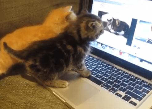 Quando Un Micio Guarda Un Video Con Dei Gatti