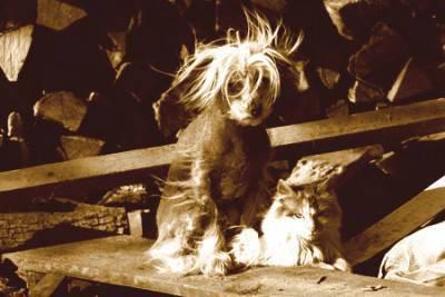 abbandono cane gatto