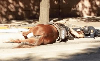 foto cavallo