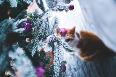 gatto natale 1