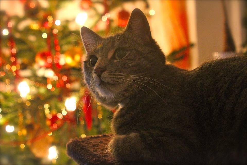 Ricette di Natale per gatto