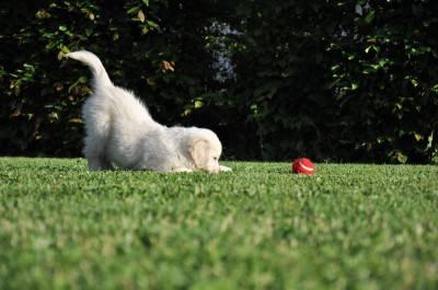 gioco cane
