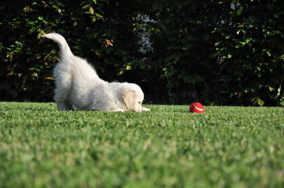 giochi educazione puppy