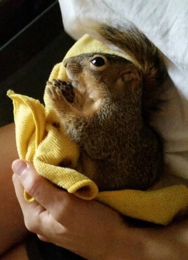 piccolo scoiattolo