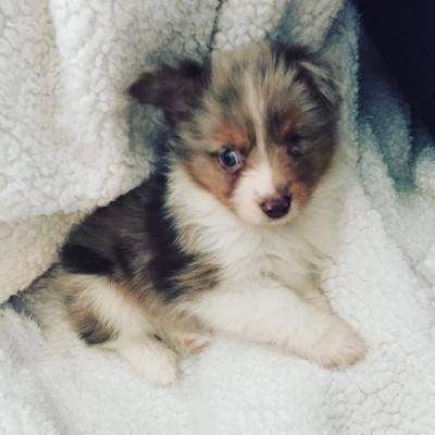 cucciolo1