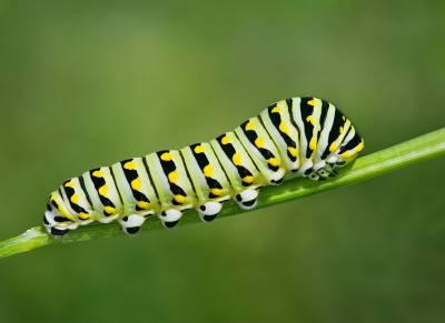 Il bruco che diventa farfalla