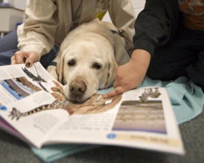 ecudazione cane- getty