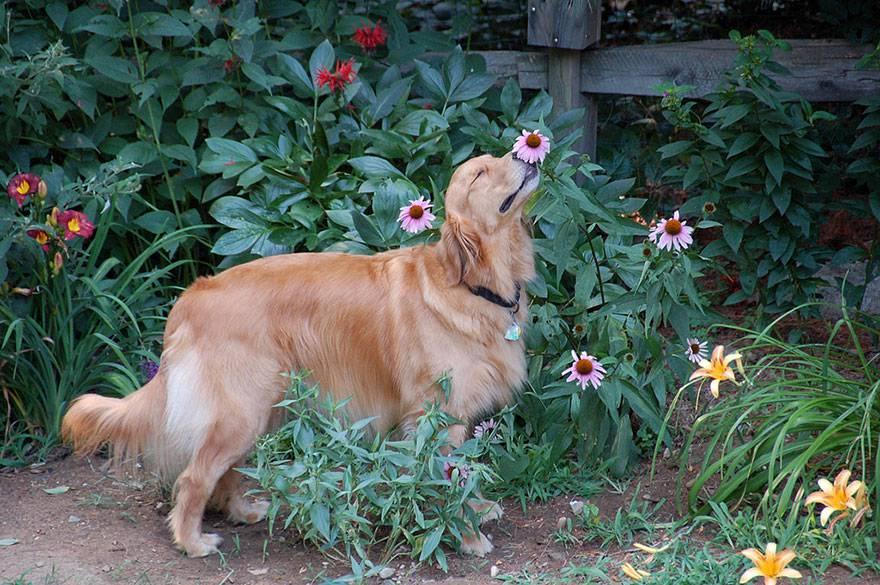 somministrazione fiori bach