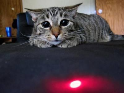 regole-gatto-gioca-laser