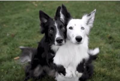 scatto perfetto cani