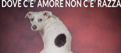Amore cane