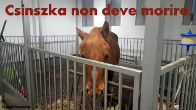 Csinszka1-2-564x317