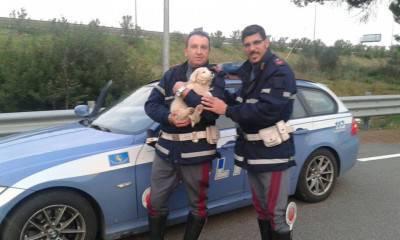 Cucciolo Polizia
