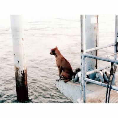 Il cane che aspetta in riva al fiume