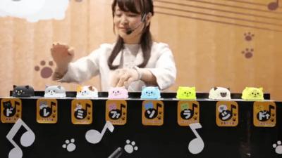 La gatto-tastiera!