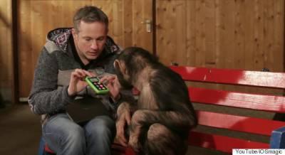 Scimpanze Ipad