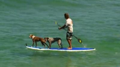 cai surf