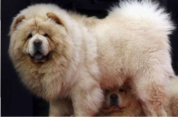 Cosa fare nel periodo di muta del cane for Casa progetta il trotto del cane