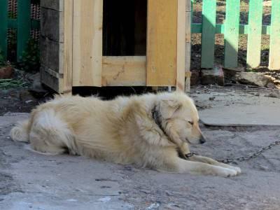 cani catena