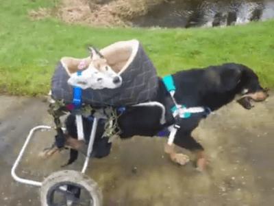 cani handicap2