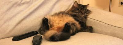 gatto morto