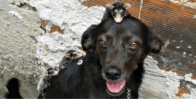 opossum-chienne-adoption-cover-1