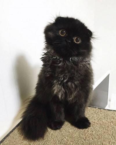 Il gatto con gli occhioni