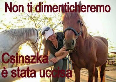 cavalli sieropositivi